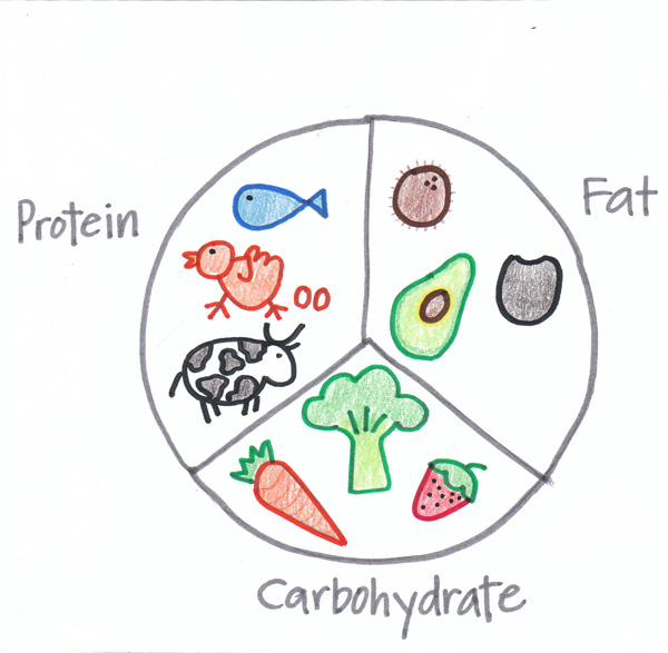 Macronutrients: carbs, fat, and protein diagram.