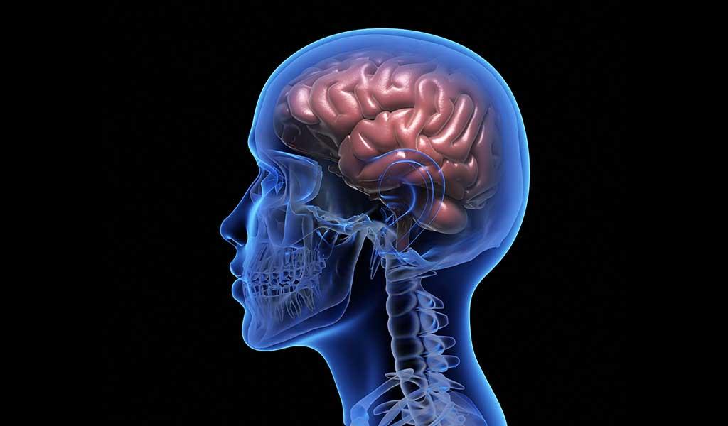 Brain First, then Body