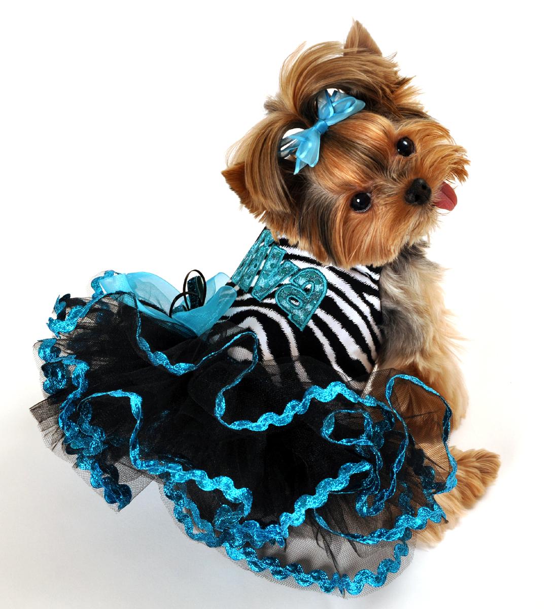 Designer Custom Made Dog Clothing