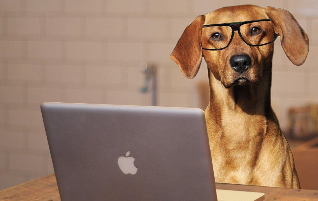 Tecnología y mascotas