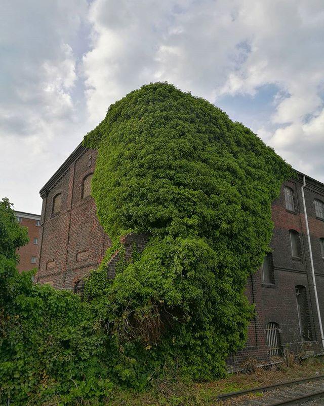 - OVERGROWN -#overgrown beauty