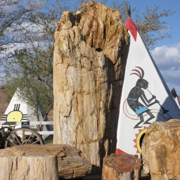 Geronimo- The World's Largest Petrified Tree
