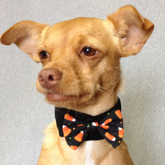 Candy Corn Bow Tie by Tuna Wear Pets