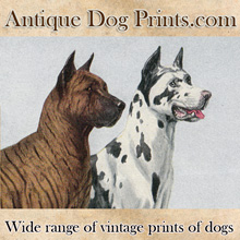 AntiqueDogPrints.com