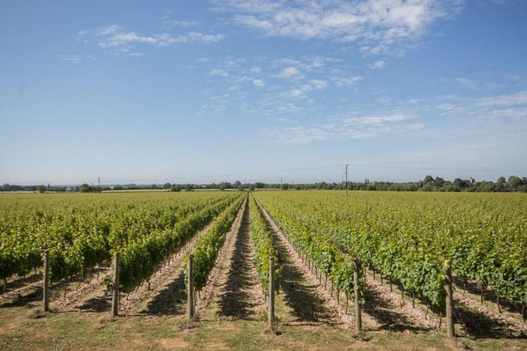 tinwood-vineyard-6