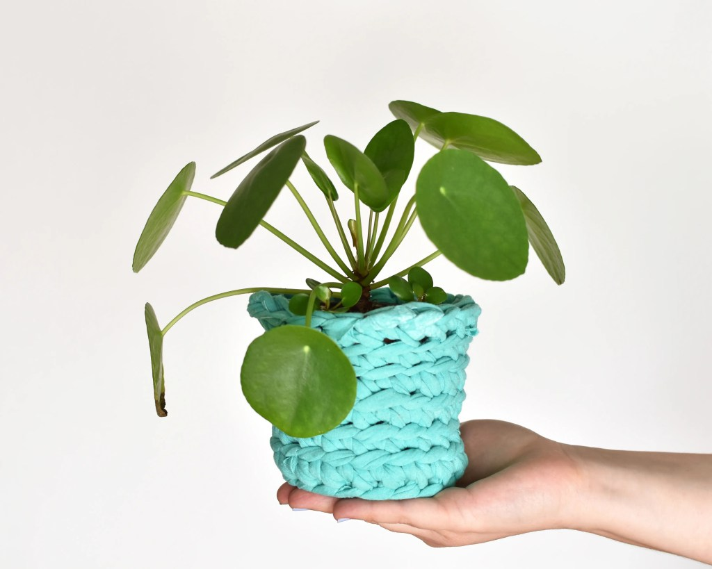 An outstretched hand holding a pilea peperomioides plant in a crochet plant pot cover made with teal t-shirt yarn.