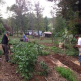 2013 Crop Mob at our house. This fall gathering was a great time to prep the garden for winter.