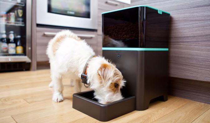 petnet nourrissez vos animaux distance. Black Bedroom Furniture Sets. Home Design Ideas