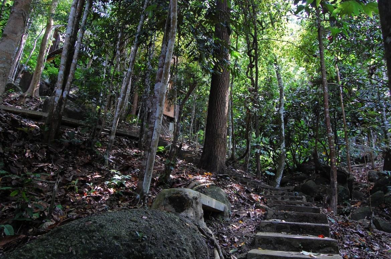 Lush Forest at Taiping SBS-Vipassana Meditation Retreat Experience