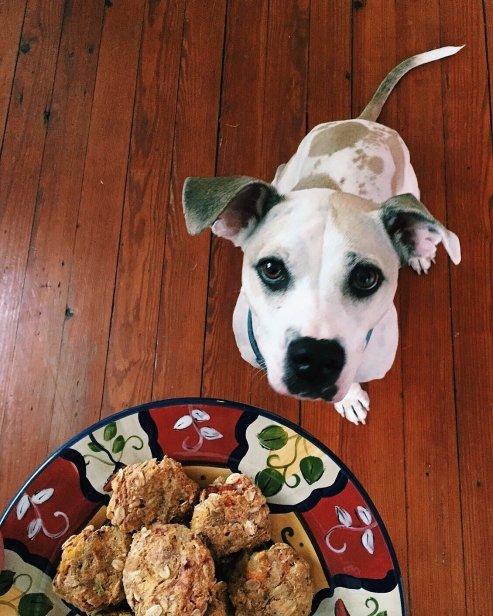 zero waste dog treats