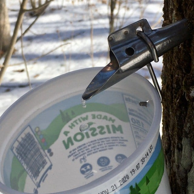Sustainable Maple Syrup