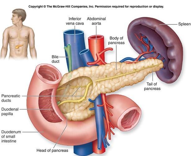 Duktus pankreatikus