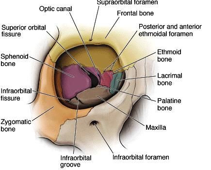 Kanalis optikus