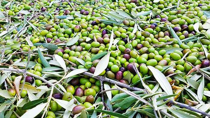 Olio EVO migliore olive