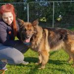 Mo Chara The German Shepherd Dog More Than Just A Herder Tipperary Live
