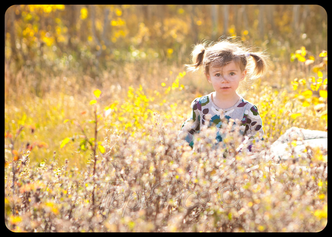 fall photos in crested butte