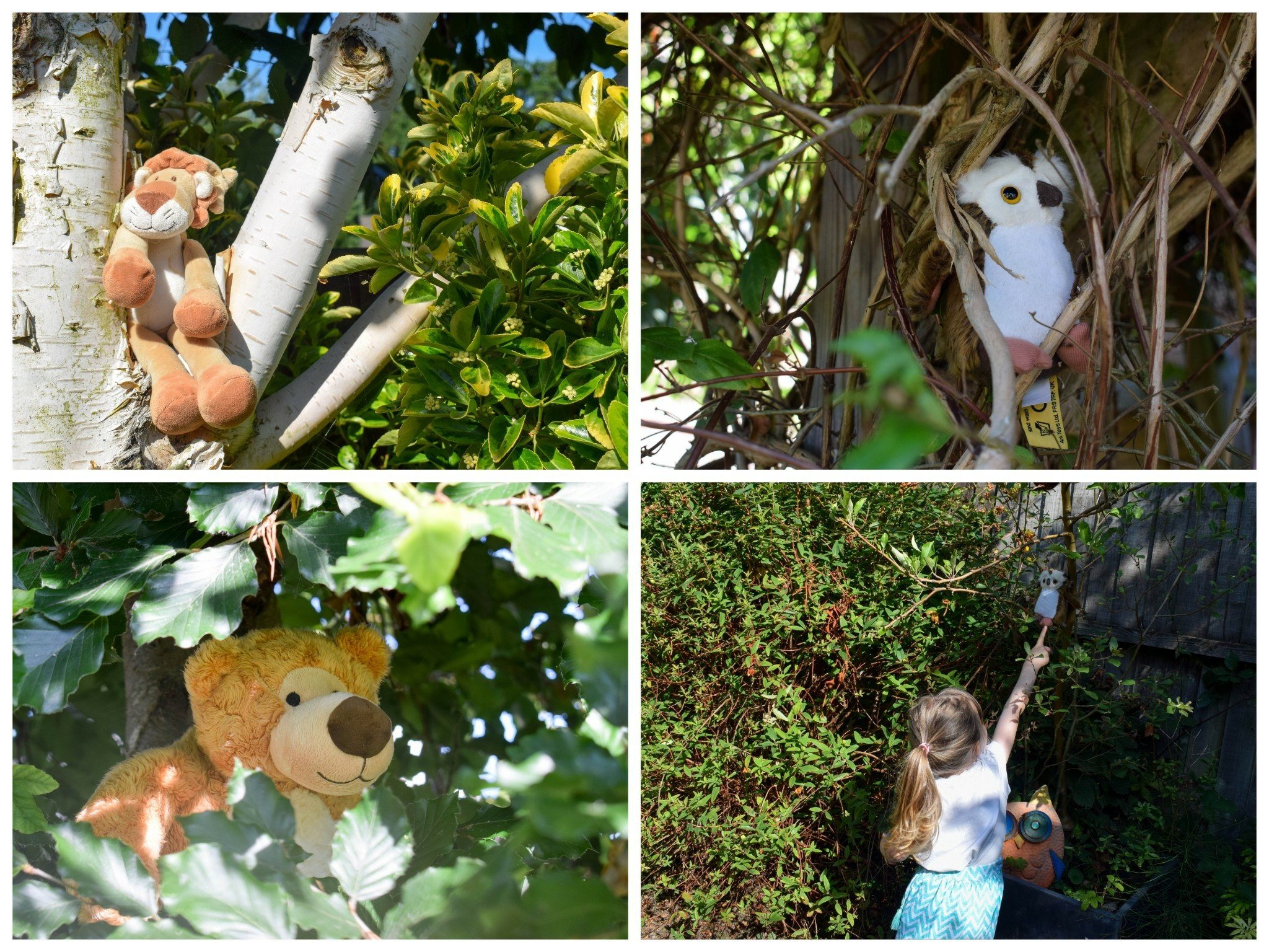 Back Garden Adventures - go on a bear hunt