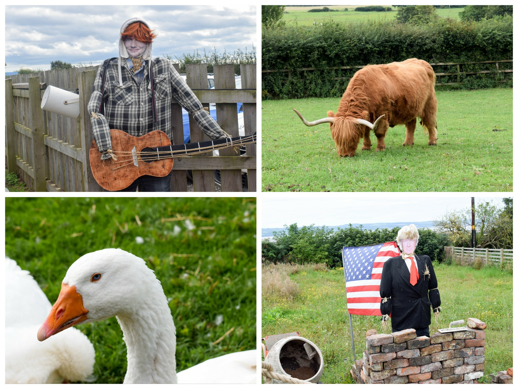 Church Farm - The Wirral - animals and celebrity scarecrows!