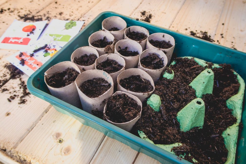 Upcycled Planting - egg boxes, toilet roll holders in use