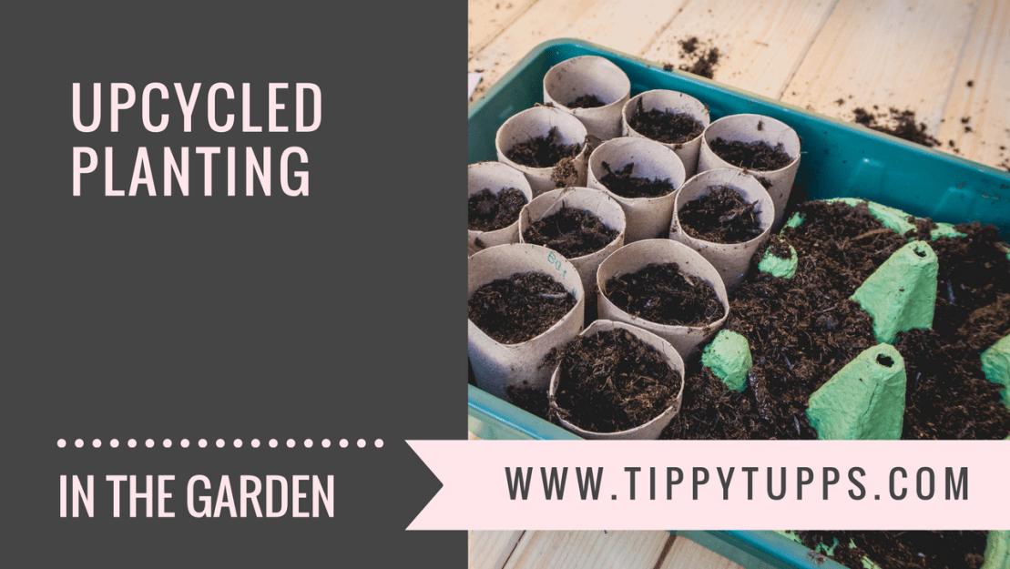 Upcycled Planting - egg boxes, toilet roll and lollipop sticks - blog post header