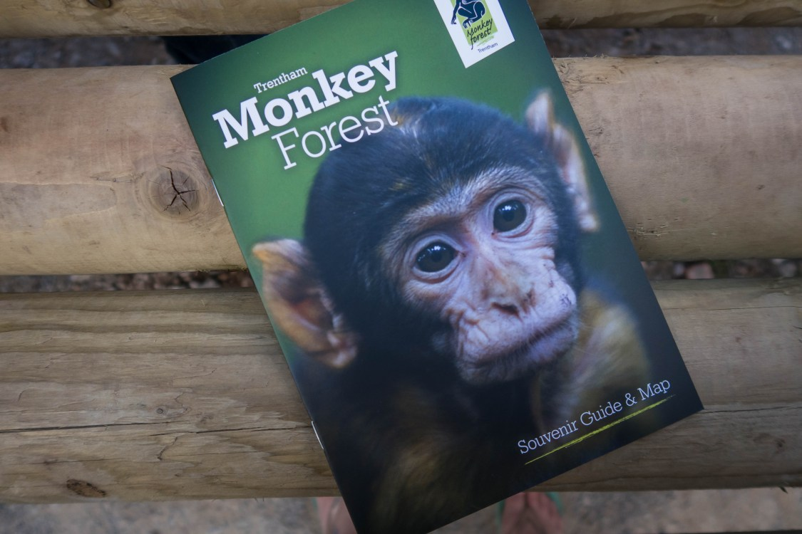 Monkey Forest - blog post header