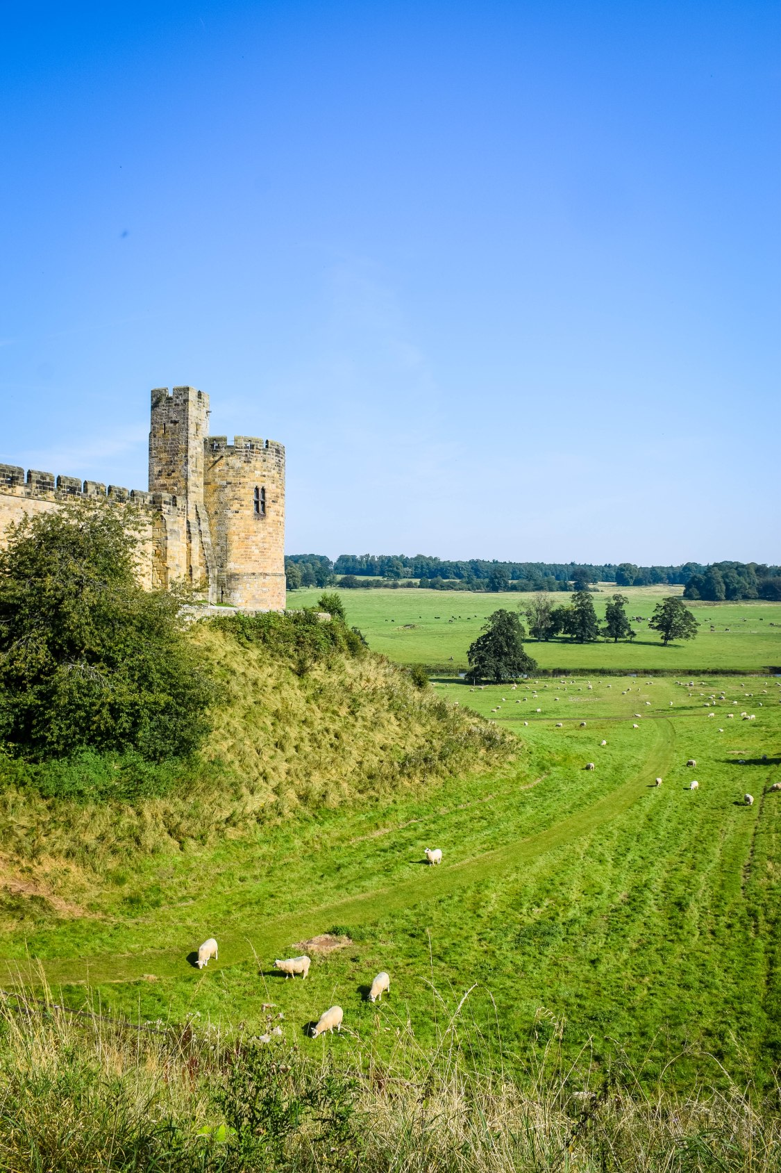 The view across the field to Alnwick Castle