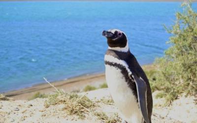 Puerto Madryn e la PENISOLA DI VALDES: alla ricerca della balena Franco-Australe