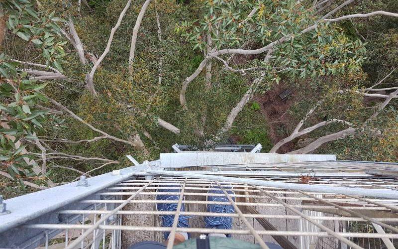 Vista dall'alto della cima del Gloucester Tree