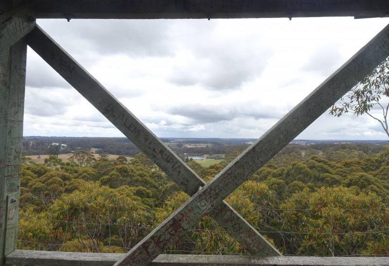 Vista dallosservatorio sulla cima del Gloucester Tree
