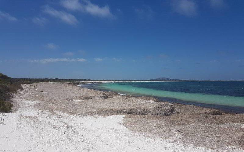 Spiaggia Rossiter Bay invasa dalle alghe