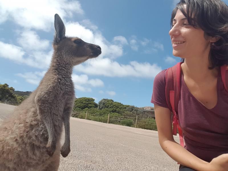 Incontro con i canguri alla spiaggia di Lucky Bay nel Parco Nazionale Cape le Grand