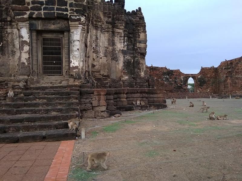 La città delle scimmie di Lopburi in Thailandia