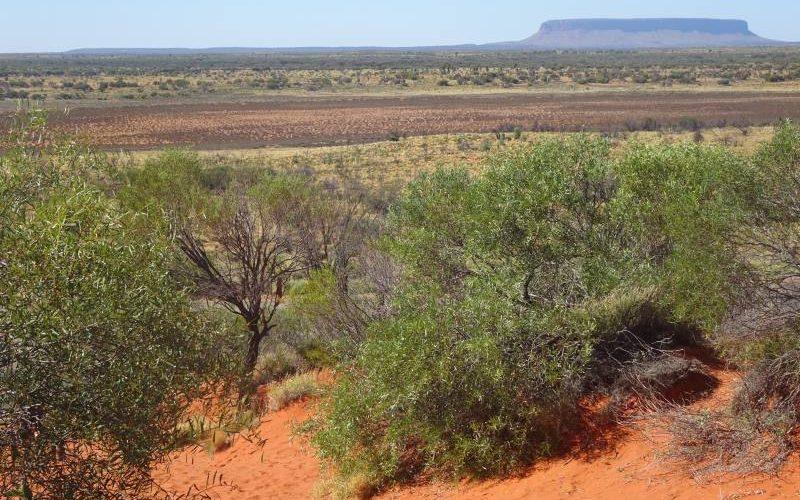Punto panoramico Mount Conner Lookout nel deserto australiano, vicino al Parco Nazionale Uluru-Kata Tjuta