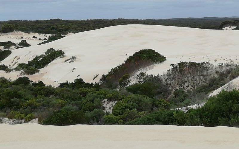 Dune e foresta nel deserto Little Sahara di Kangaroo Island