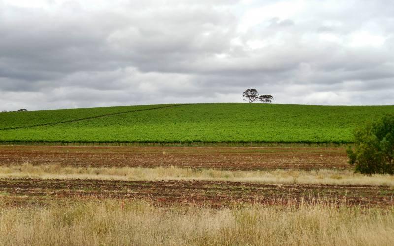 Paesaggio collinare pieno di vigneti nei dintorni di Adelaide in South Australia