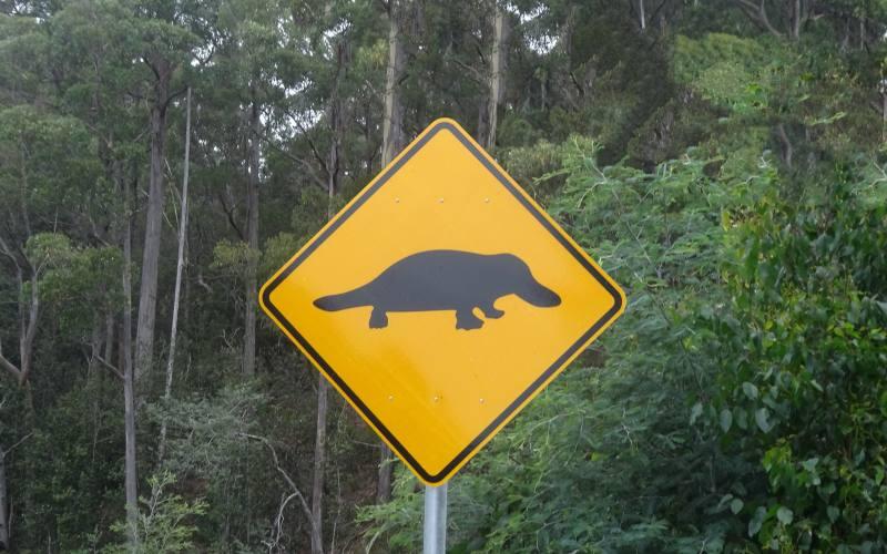 """Cartello stradale """"Attraversamento ornitorinchi"""" durante On the Road in Queensland"""