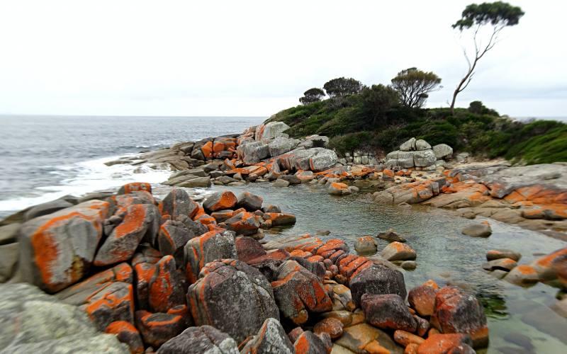 Spiaggia di Bay of Fires con le rocce rosso fuoco in Tasmania