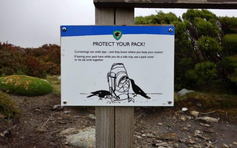 Cartello di attenzione con i corvi australiani durante il trekking Overland Track in Tasmania