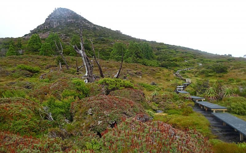Scalata al Mount Ossa, percorso secondario e montagna più alta della Tasmania