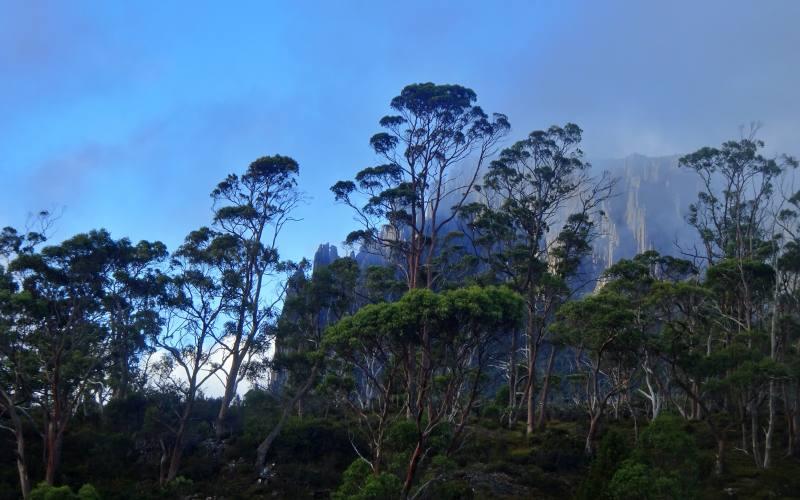 """Vista del Mount Oakleight dal rifugio """"Pelion Hut' lungo l'Overland Track in Tasmania"""