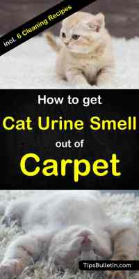 How to Get Cat Urine Smell Out of Carpet - 6 Tips and ...