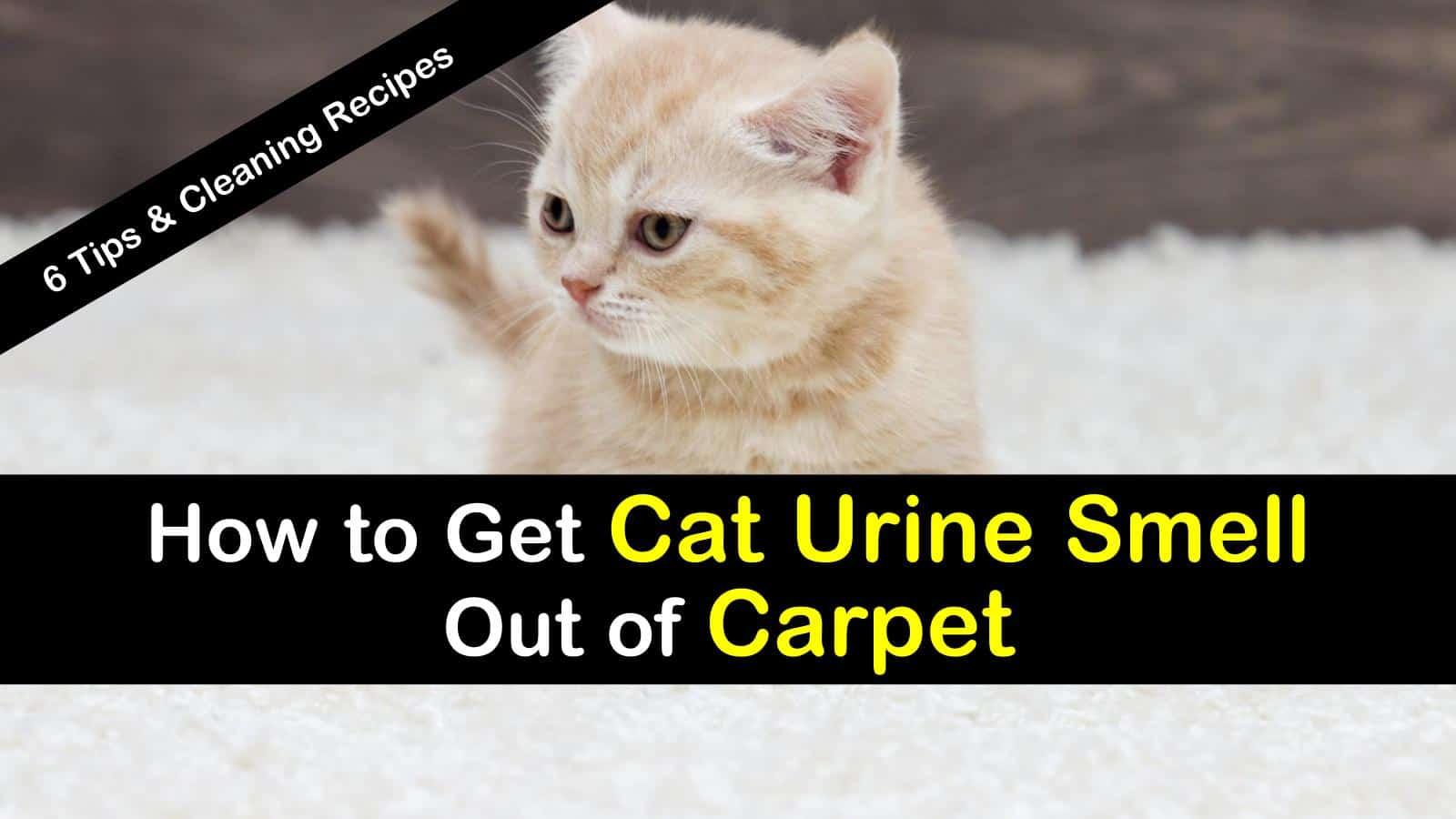 How to Get Cat Urine Smell Out of Carpet