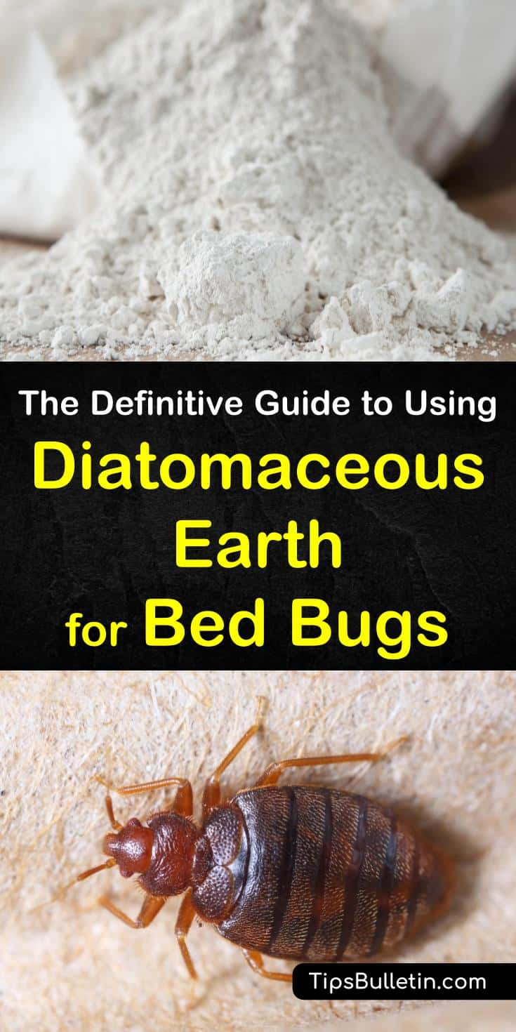 The Definitive Guide to Using Diatomaceous Earth for Bed Bugs