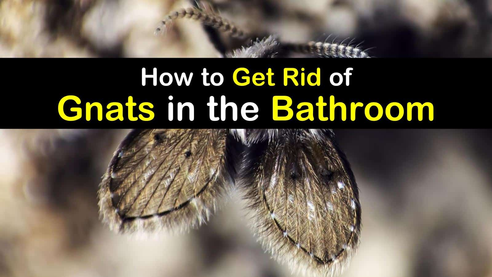 how to get rid of gnats in the bathroom