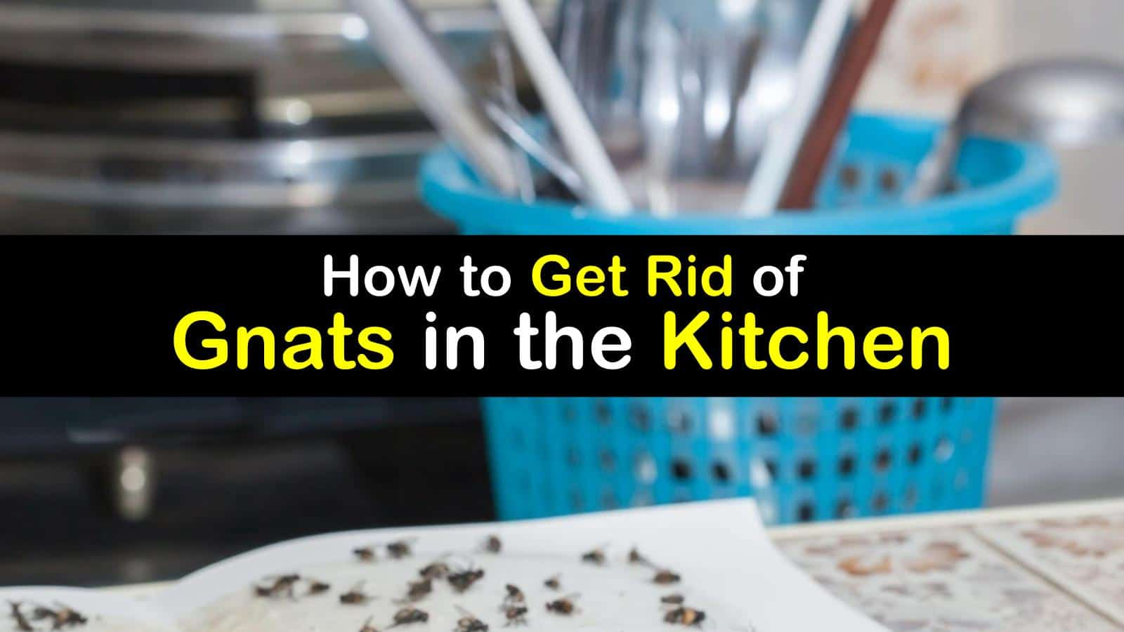 Fly Problem  How to Get Rid of Gnats in the Kitchen