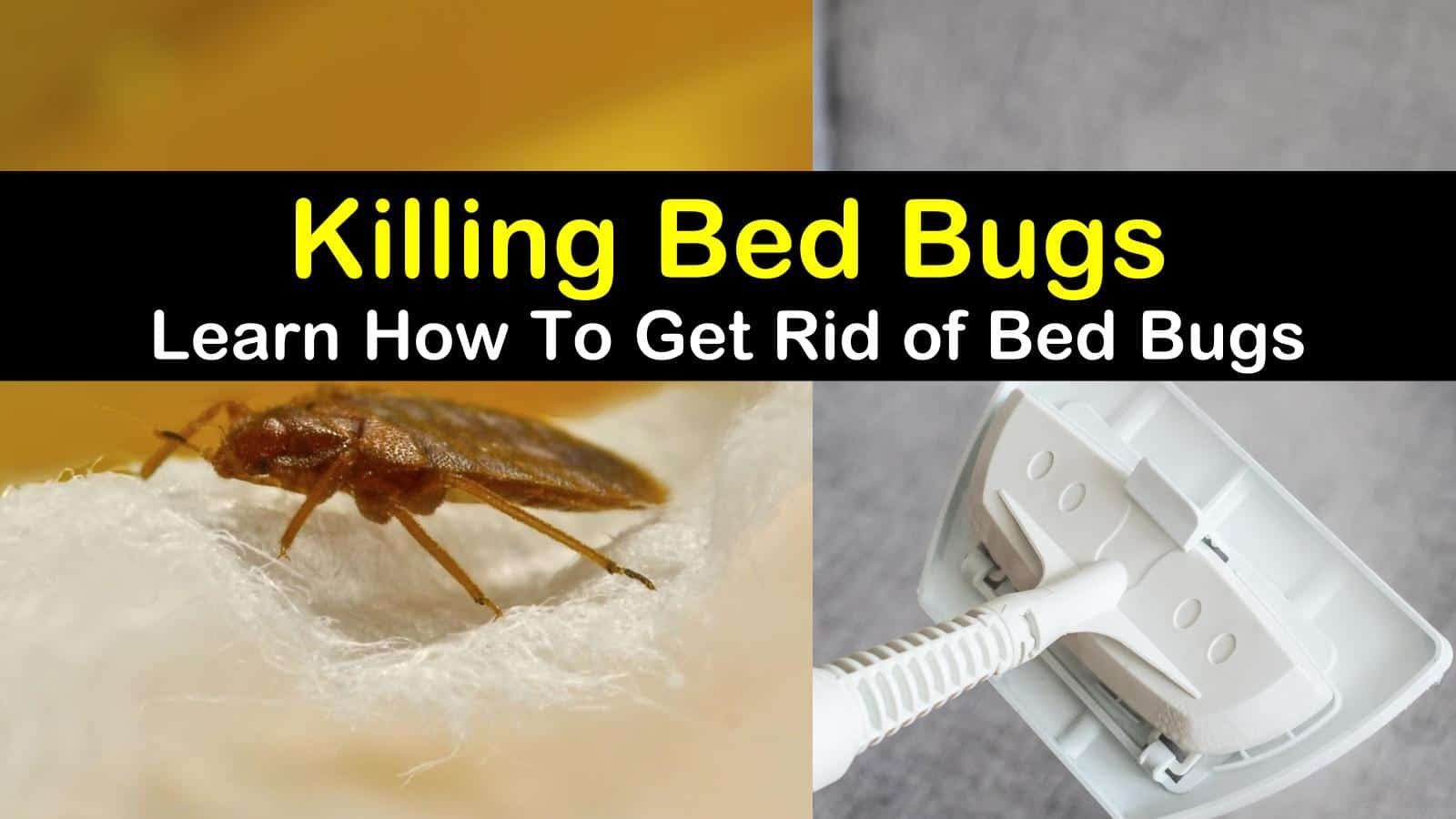 Killing Bed Bugs - Learn How To Get Rid of Bed Bugs