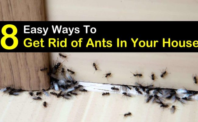 8 Simple Ways To Get Rid Of Ants In The House Rid Of Ants Get Rid Of Ants Home Remedies For Ants Dubai Khalifa