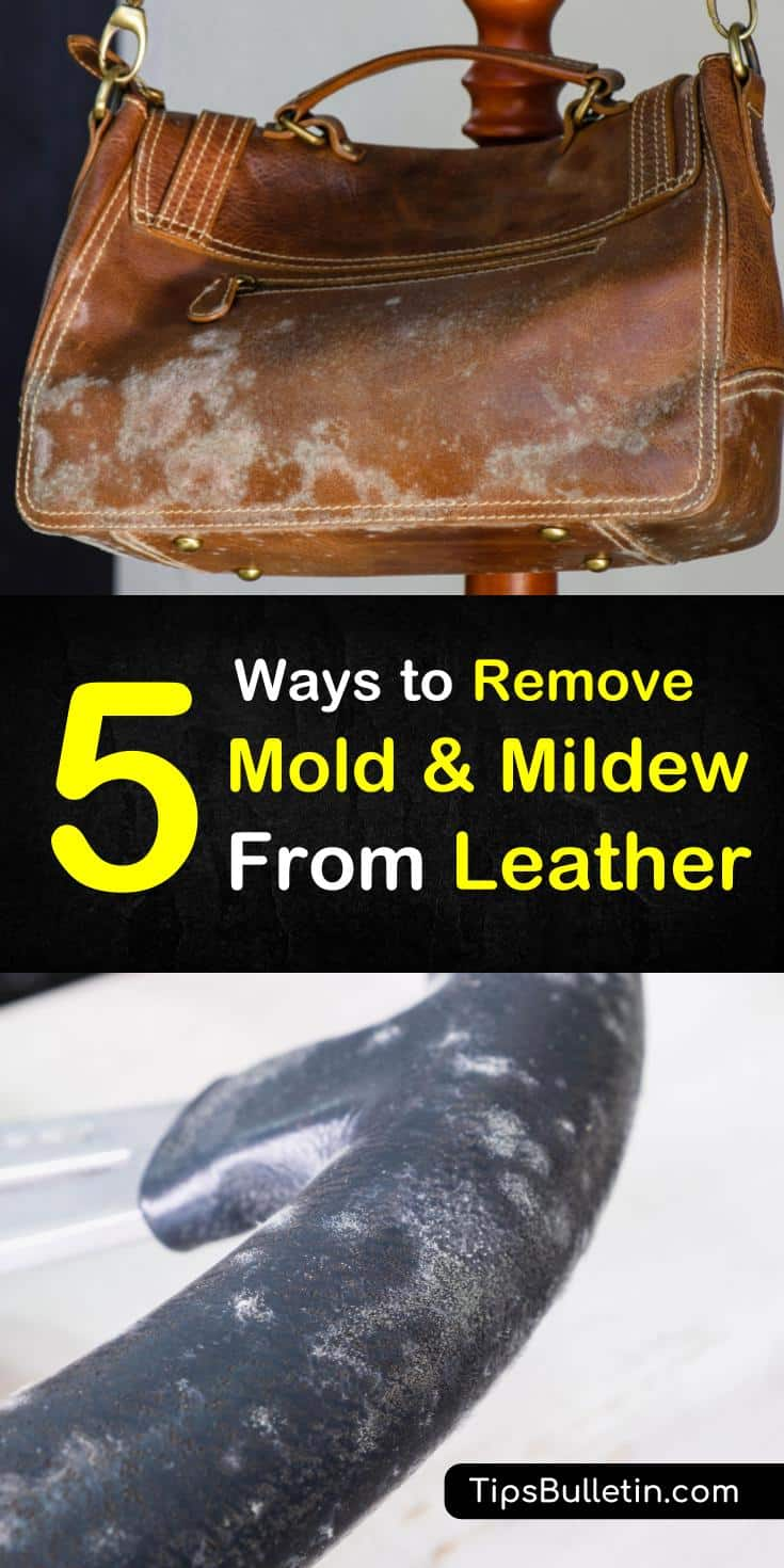 5 Ways To Remove Mold and Mildew from Leather
