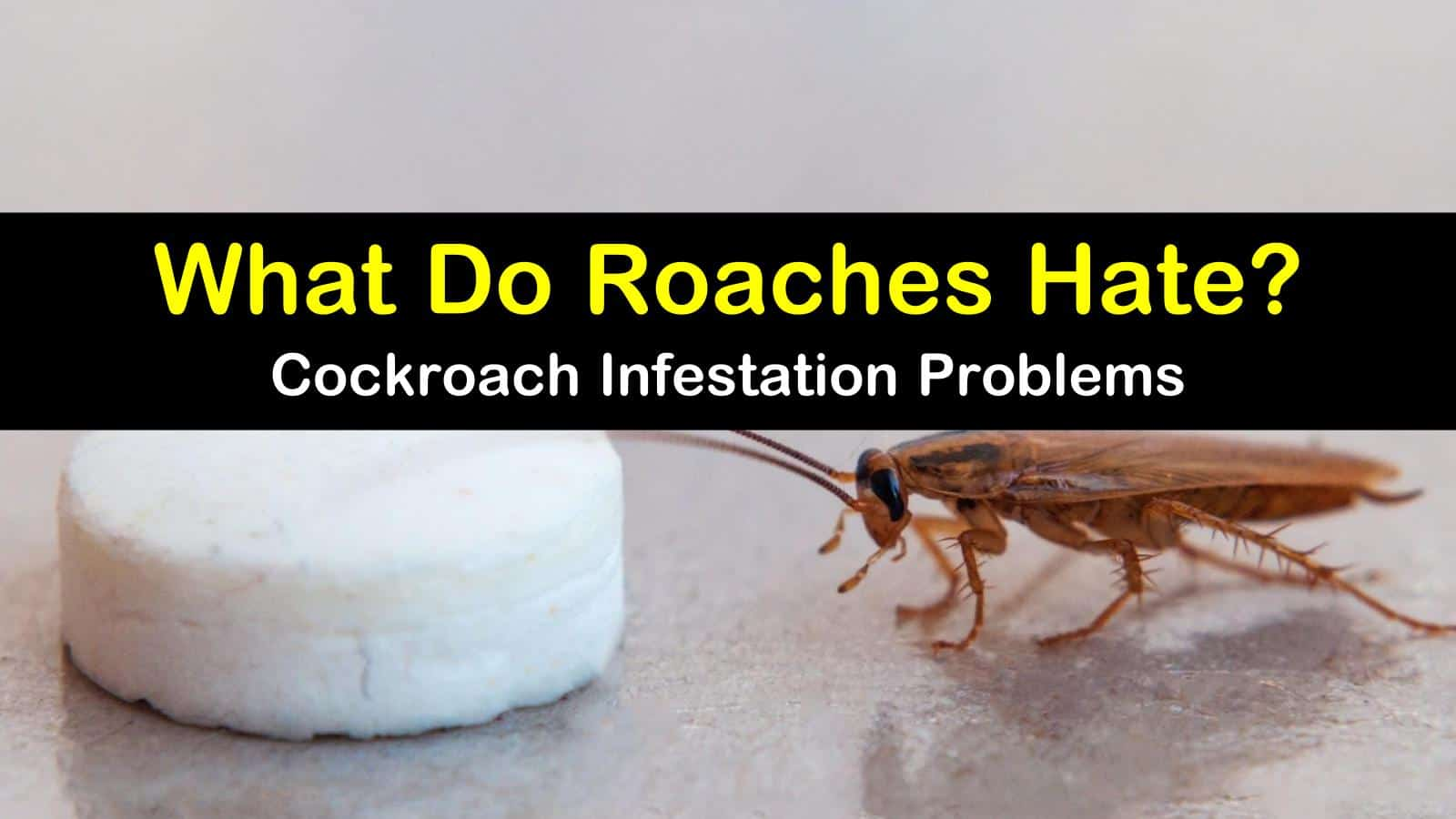 What Do Roaches Hate? - Guide to Cockroach Infestation ...