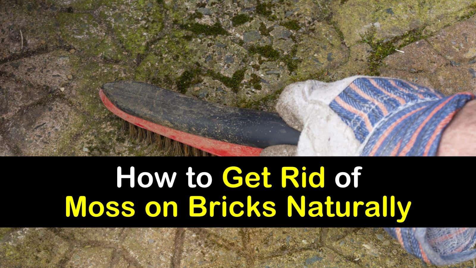 get rid of moss on bricks naturally